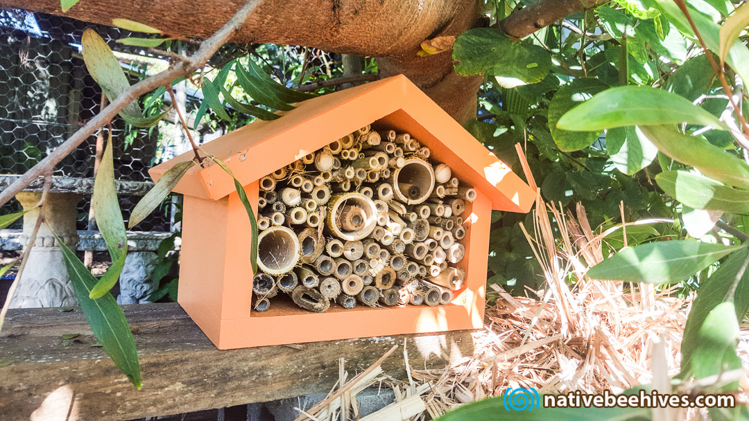 Solitary Bee Hotels Native Bee Hives