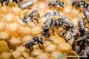 beehivesplitcloseup
