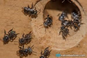bees_octahive06092015