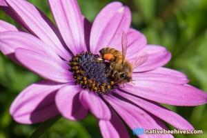 honeybeeflower