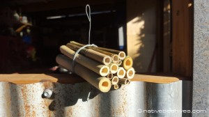 nativebee+bamboo