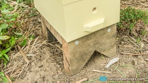 nativebeehive_gardenstand1