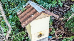 nativebeehive_rustyroof