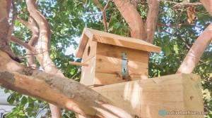 nbh birdhouse3