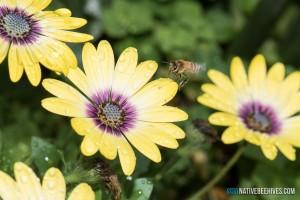 nbh honeybee flower