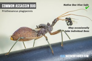 nbh pestsgraphic assassinbug