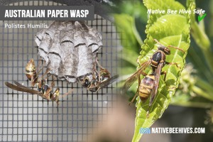 nbh pestsgraphic wasp